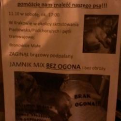 Mistrz marketingu z Krakowa - Szukam psa