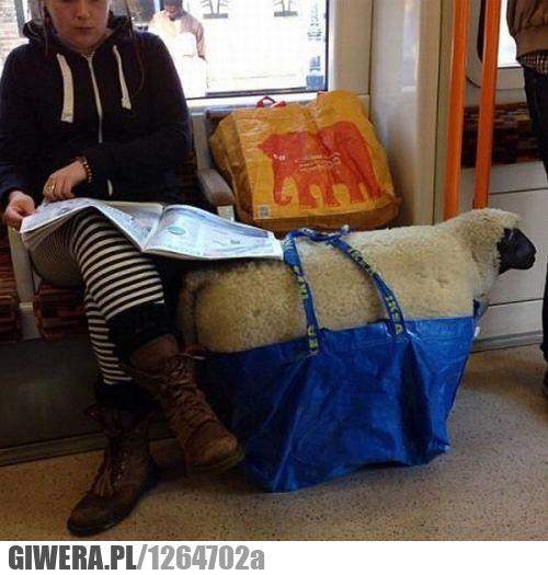 spakowany,bagaż