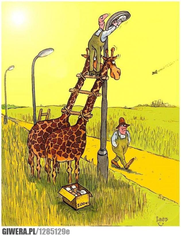żarówka,żyrafa