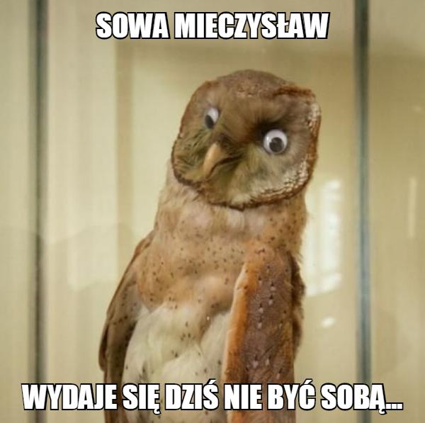 Sowa Mieczysław