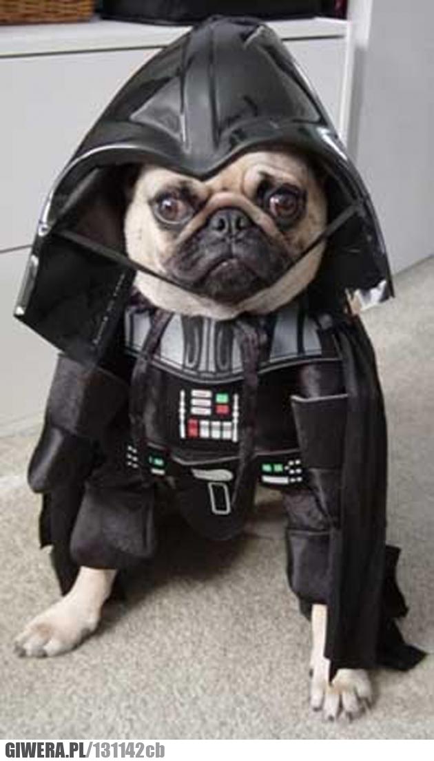 Pies,Dark Vader