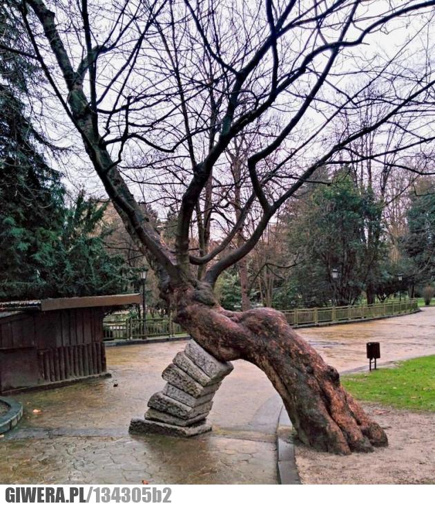 natura,drzewo,park