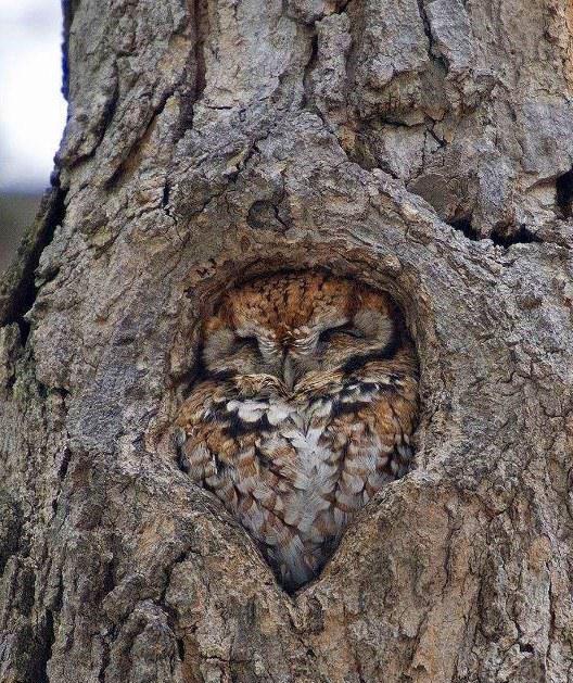 Sowa w drzewie