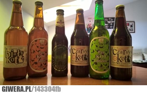 piwo,kot,kociara