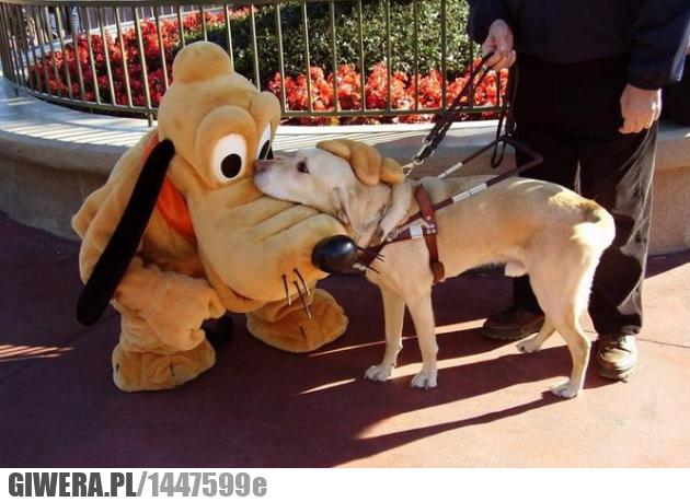 Pluto,pies przewodnik