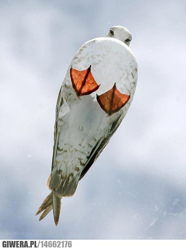 Ptaszek,Szklany dach