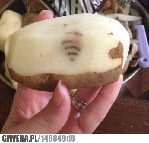 Wifi,ziemniak