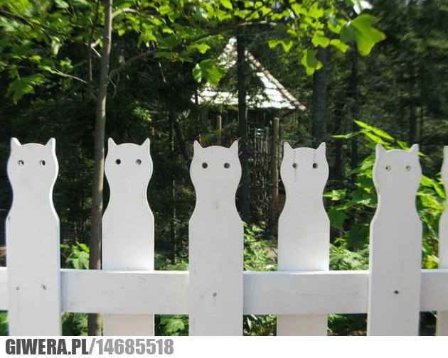 płot,koty
