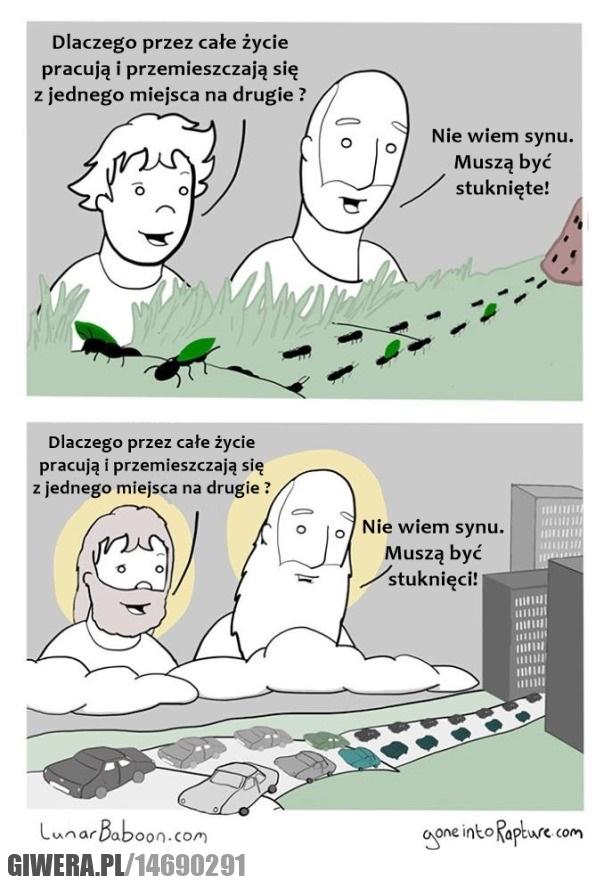 Bóg,praca,mrówki