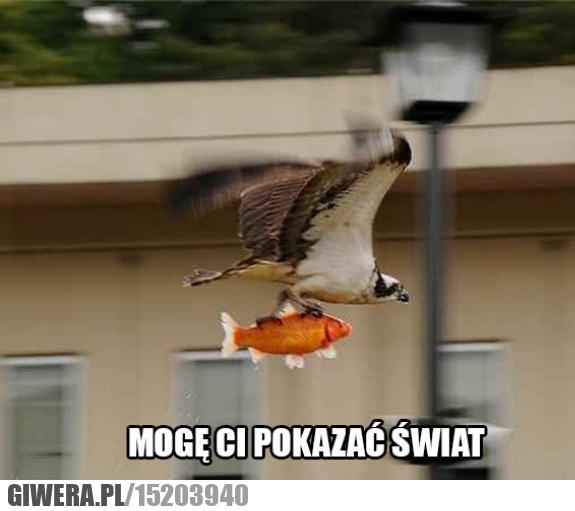 Podróż,ryba,ptak
