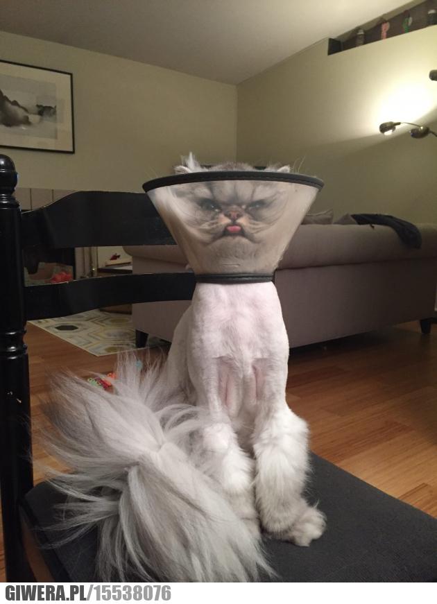 Mówili że mogę być kim zechcę, lampa, kot