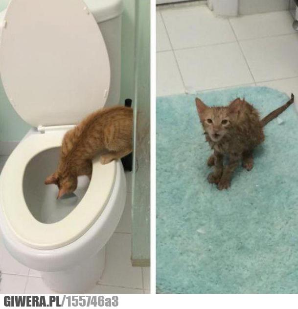 Kot, kotek, wc