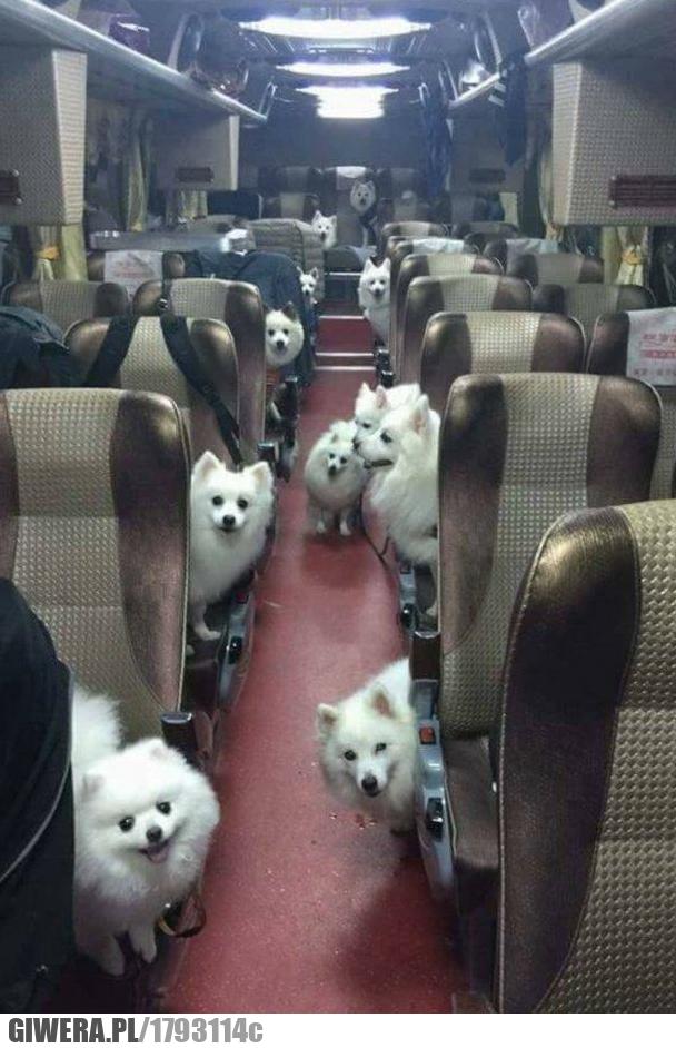 Kiedy otwierasz chipsy podczas wycieczki szkolnym autobusem