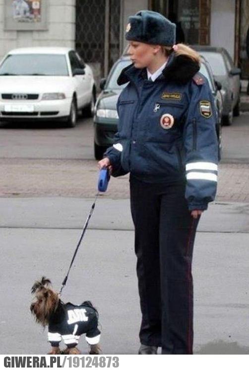 Pies policyjny do wykrywania podrobionych kosmetyków