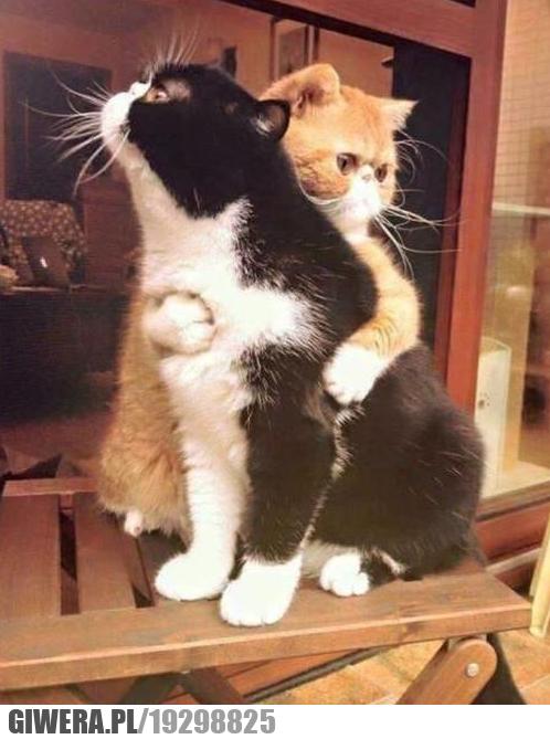 Kocie przytulaski