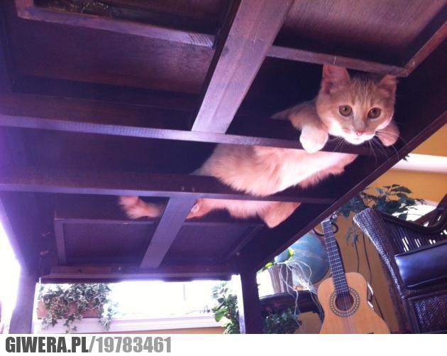 Gdzie ten mój kot?
