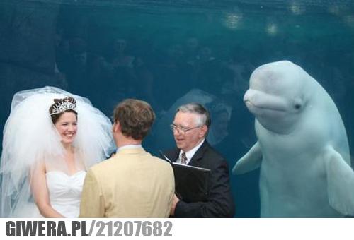 Ciekawy świadek na ślubie