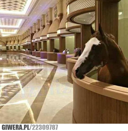 dubaj, konie