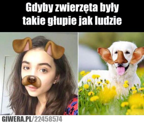 baran, dziewczyna, memy