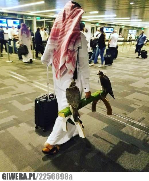 lotnisko,ptaki,sokół
