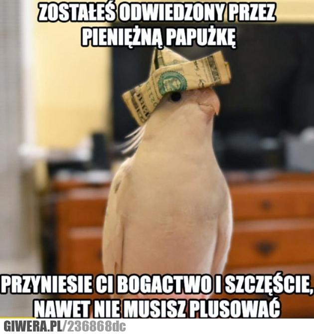 Pieniężna papużka