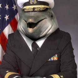 Kapitan delfin