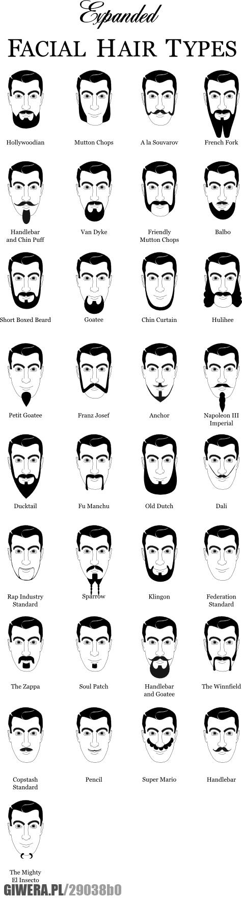 broda, wąsy