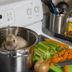 Potrawka z króliczka
