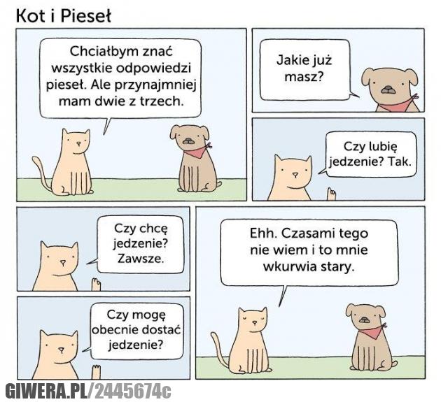 kot,pieseł,jedzenie