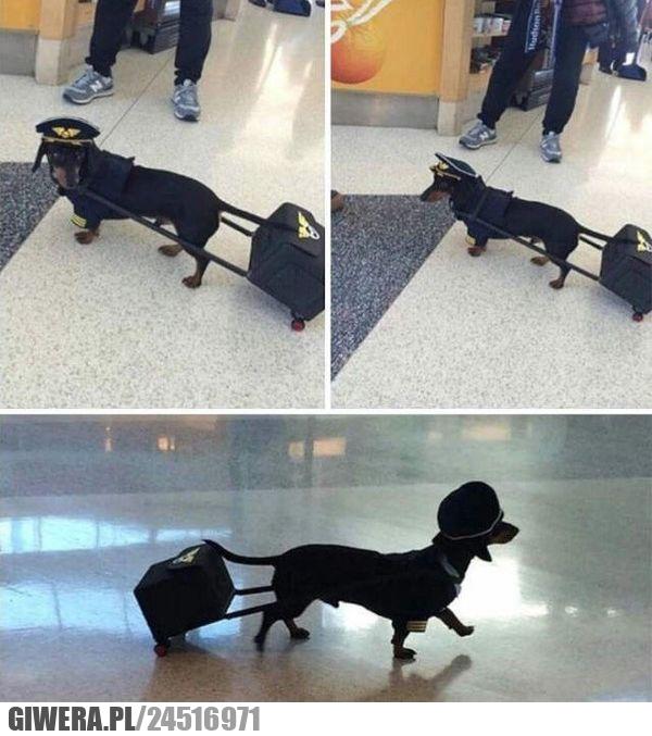 Śmieszny piesek,lotnisko