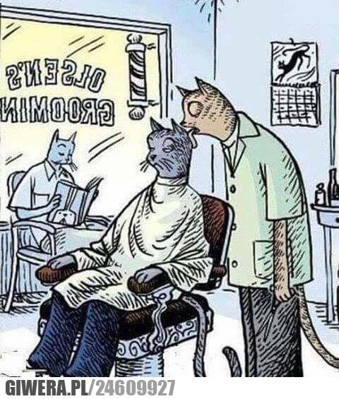 Śmieszny kotek,fryzjer