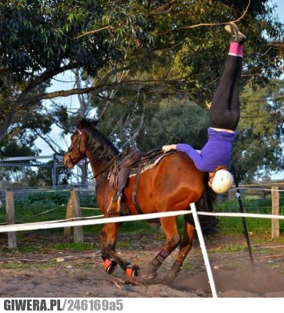 W idealnym momencie,koń