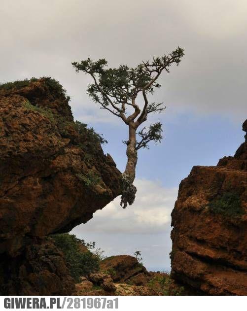 matka natura,drzewo